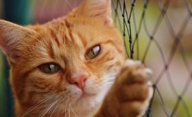 Castration du chat : l'essentiel à savoir