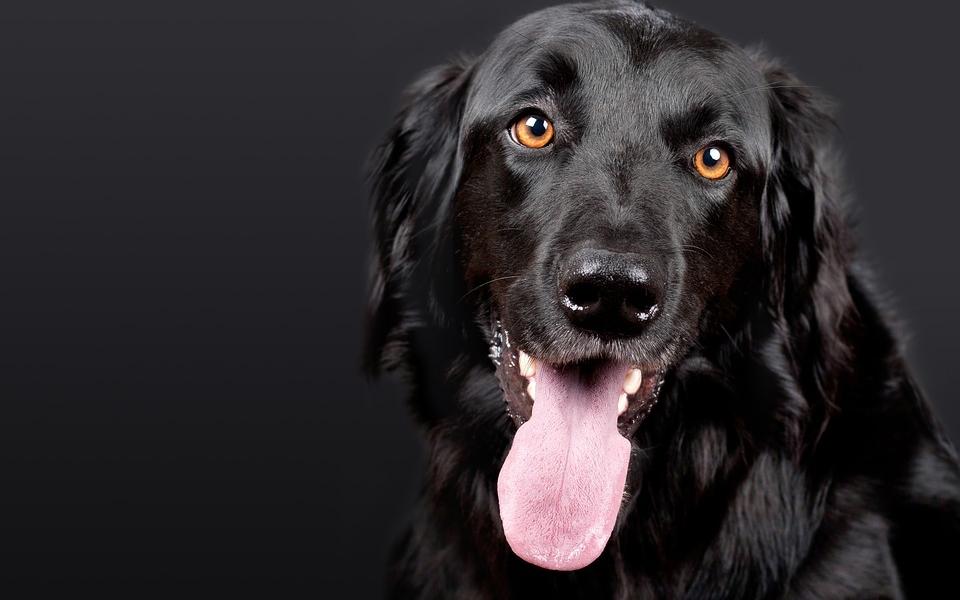 Choisir un chien en bonne santé : les signes à prendre en compte
