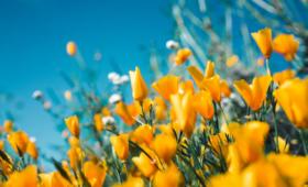 7 activités à faire au printemps en famille